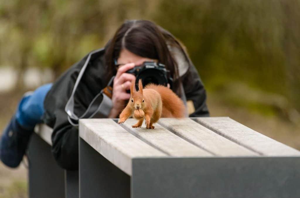 Fotoprojekt Eichhörnchen
