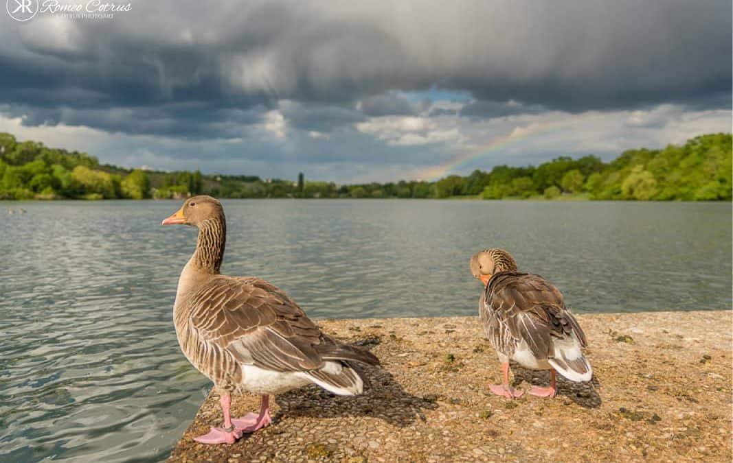 Fotoprojekt Wasservögel