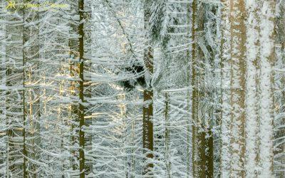 Unterwegs im Winterwonderland